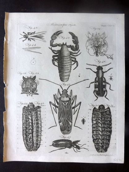 Encyclopaedia Britannica 1797 Antique Print. Microscopic Objects. Insects 303